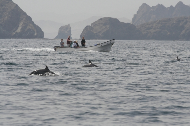 Dolphin_off Muscat (r)