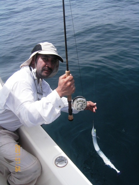 Garfish on the fly (6.07.07)