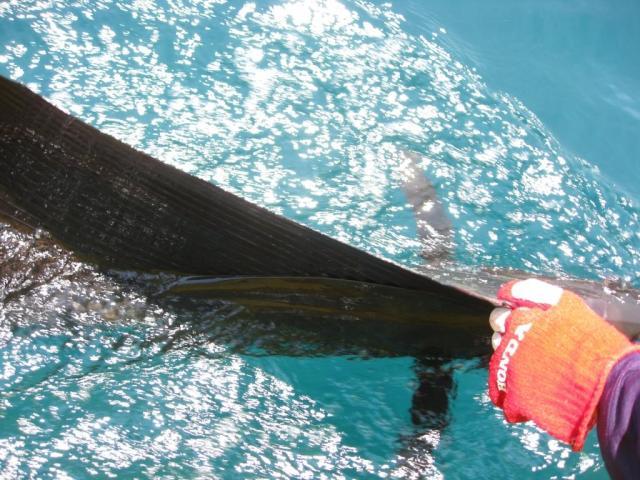 Sailfish release #2 (28.10.07)