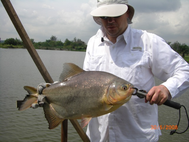 1 of Anthony's Pacu (30.05.08)