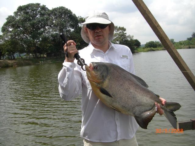 6.8kg (15lb) Pacu (30.05.08)