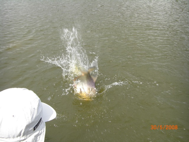 Pacu jumping (30.05.08)