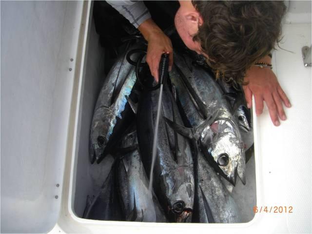 Cape Town Tuna (6.04.12) (5) [r]