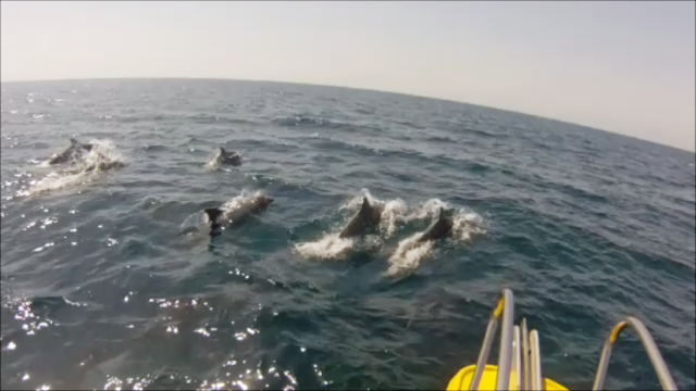 Dolphins_04.03.13 Snapshot 1