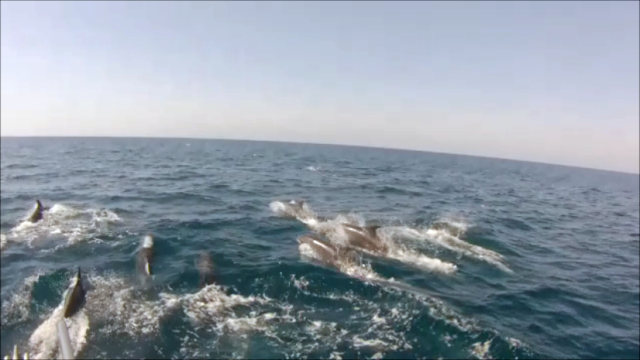 Dolphins_04.03.13 Snapshot 2