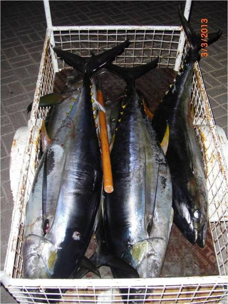 The Tuna Catch_03.03.13 [r]