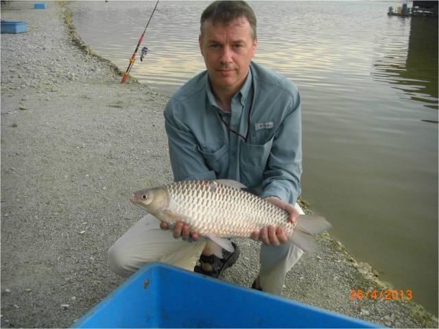 Carp-like Fish - Jelawat [r]