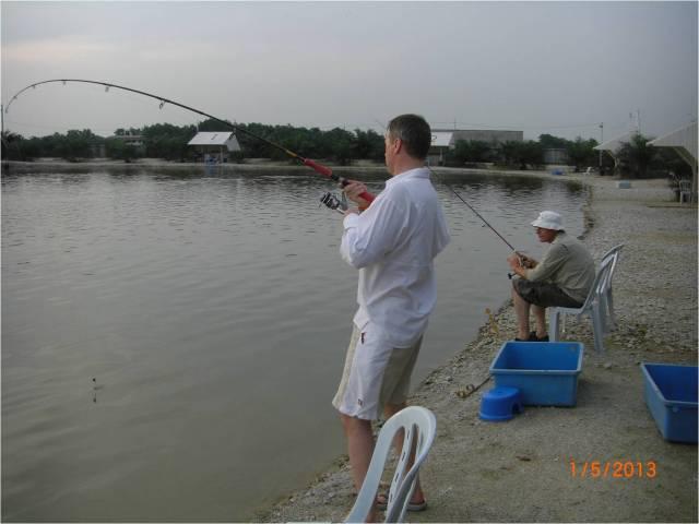 AG_Amazon Redtail Catfish (2) [r]