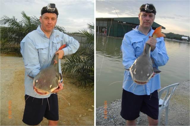 Fish No.7 & 8_Amazon Redtail Catfish (10.05.13)