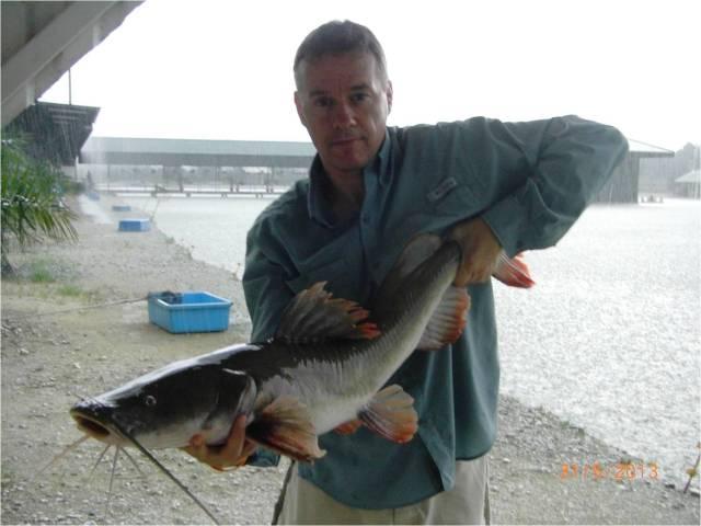 F3_Asian Redtail Catfish 8kg (31.05.13) (4) [r]