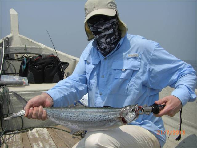 King Mackerel No.1 [r]