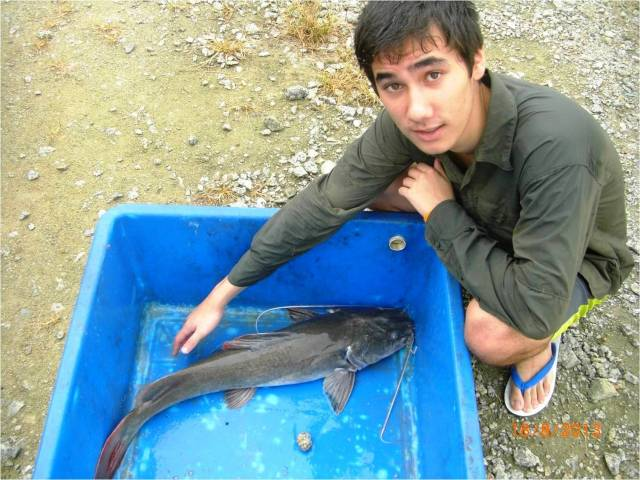 (1) Sion - Asian Redtail Catfish No.1 [ed r]