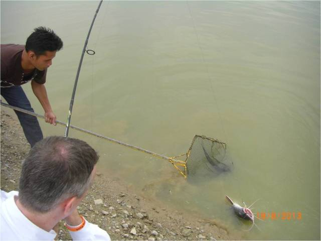 (11) AG - Asian Redtail Catfish on Lure 3 [r]