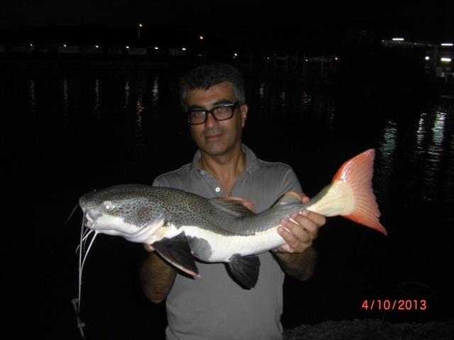 (6)_Fish No.5