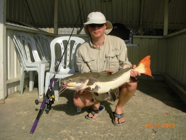 (4)_Amazon Redtail Catfish