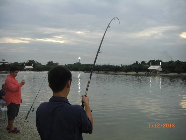 (15)_Ceri fighting Fish no.2