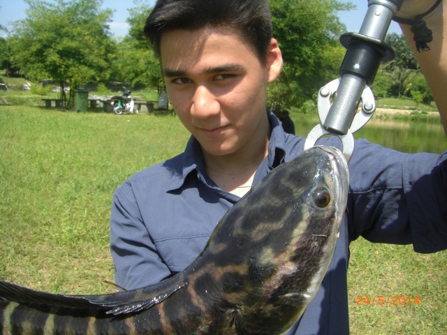 (16)_Ceri's second Snakehead (24.05.14)