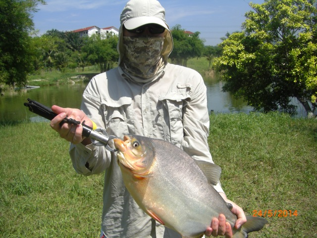 (17)_Pacu on soft plastic lure (24.05.14)