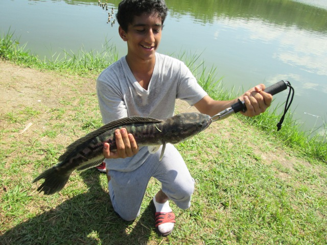 (39)_Abdullah's first Snakehead (07.06.14)