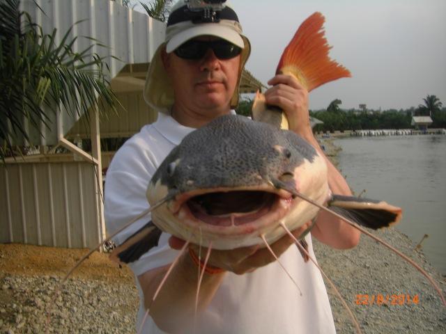 (10)_Fish No.5 - 24lb Amazon Redtail Cat (22.08.14)