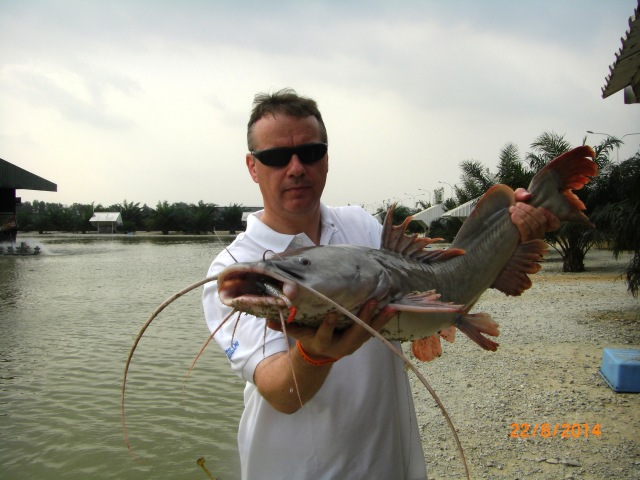 (3)_Fish No.1 - Asian Redtail Catfish (22.08.14) [ed]