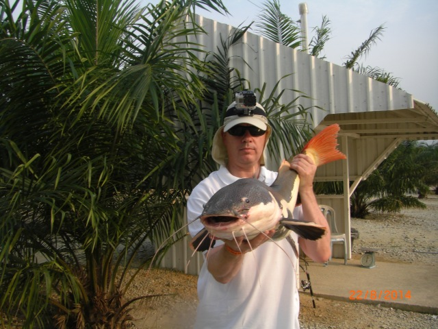 (9)_Fish No.5 - 24lb Amazon Redtail Cat (22.08.14)