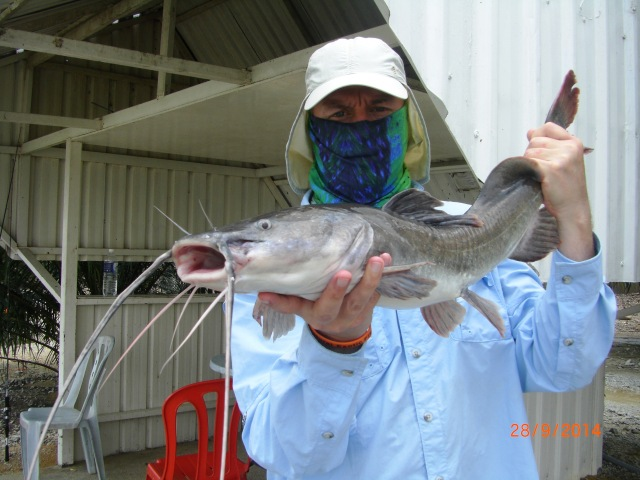(19)_Asian Redtail Catfish (28.09.14) [ed]