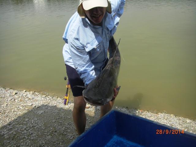(3)_Chao Phraya Catfish (28.09.14) [ed]