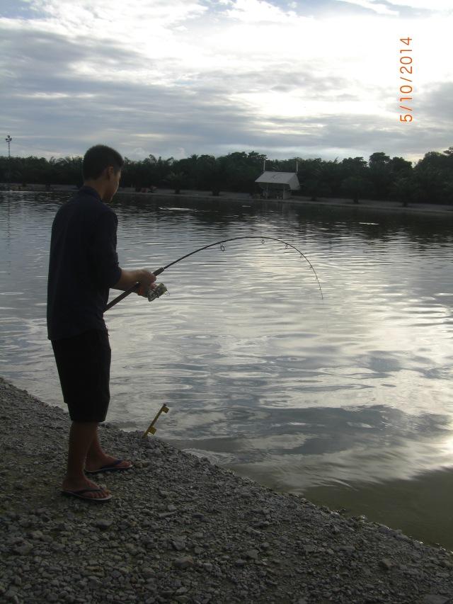 (1)_Ceri - Asian Catfish no.1