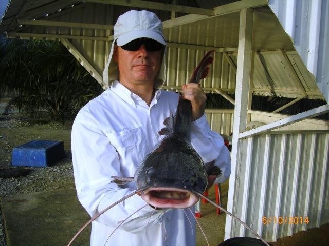 (26)_Asian Catfish no.5 [ed]