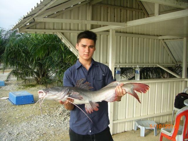 (4)_Ceri - Asian Catfish no.1 [ed]