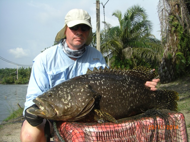 (17)_Grouper No.1 (29.11.14)