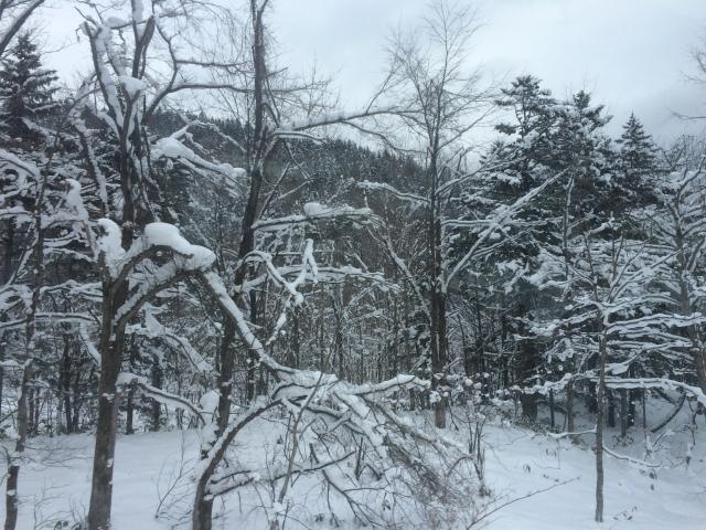 Hokkaido_Furano (Dec. 2014) (19)