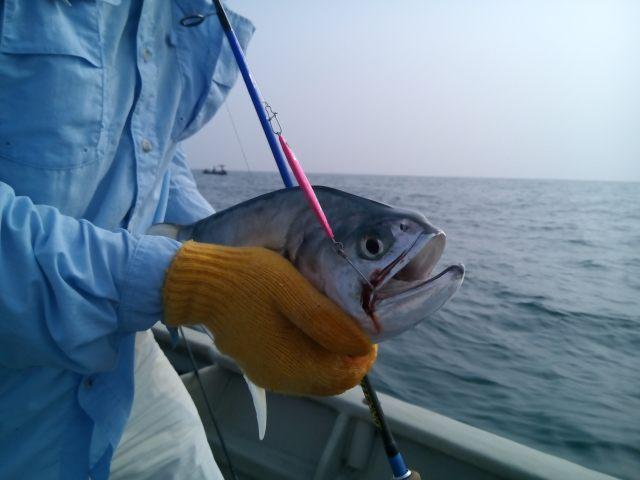 (6) Talang Queenfish - Port Dickson (21.03.15)