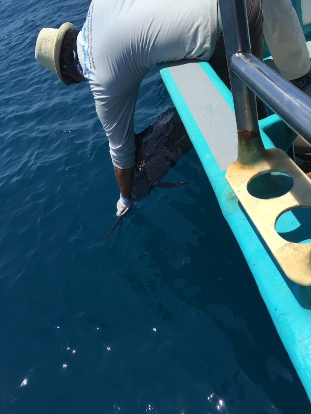 (12)_Sailfish no.1 (19.05.15)