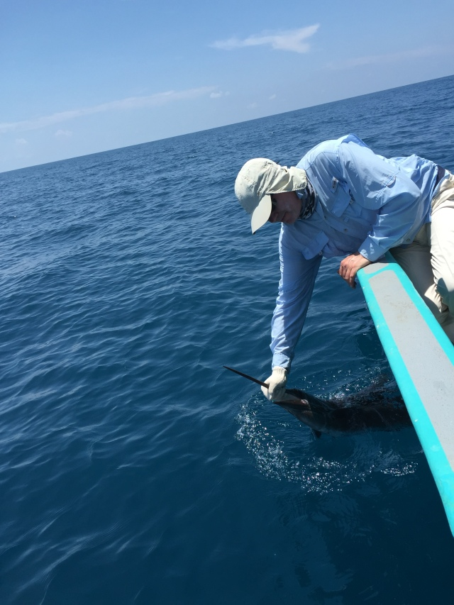 (13)_Sailfish no.1 (19.05.15)