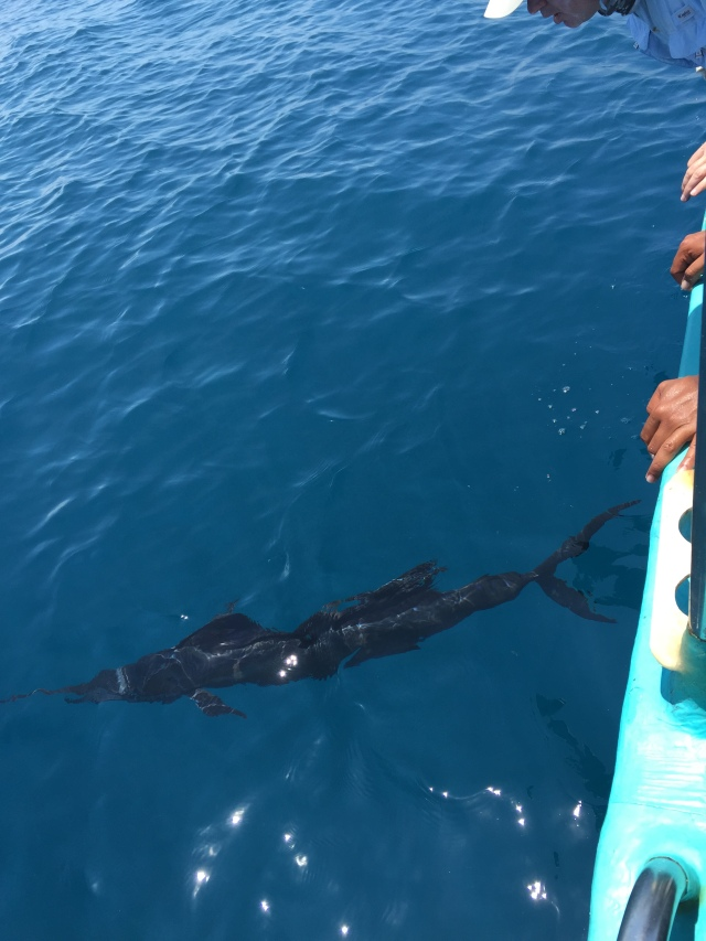 (25)_Sailfish no.1 (19.05.15)