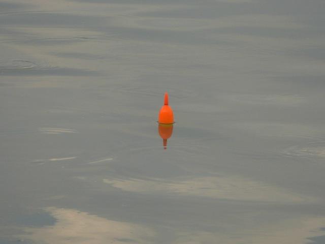 (2)_Float-fished live-bait (09.08.15) [c]