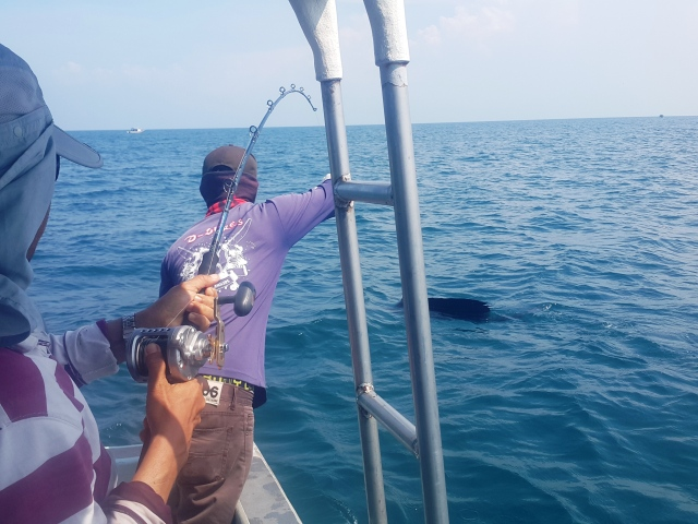 (J67)_Sailfish Triple Header (16.08.15)