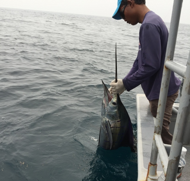 (8)_Nick's 2nd Sailfish (18.10.15) [c]
