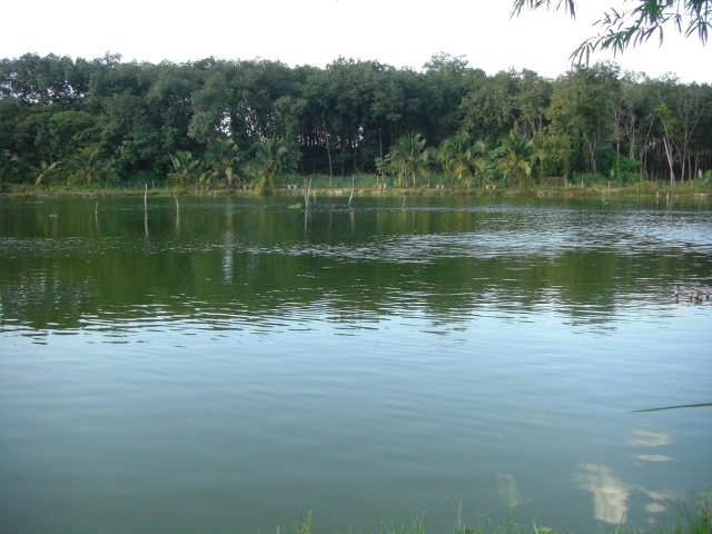 (2)_FV Toman Pond (26.12.15)
