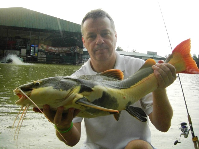(3)_Amazon Redtail [fish no.1] (15.01.16) [ed]