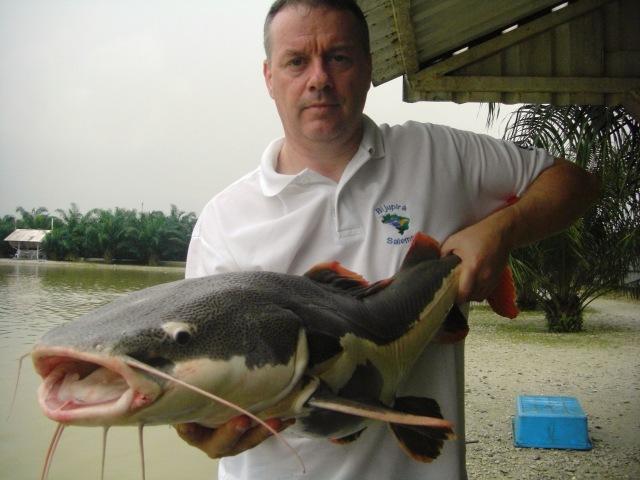 (7)_Amazon Redtail [fish no.2] (15.01.16) [ed]