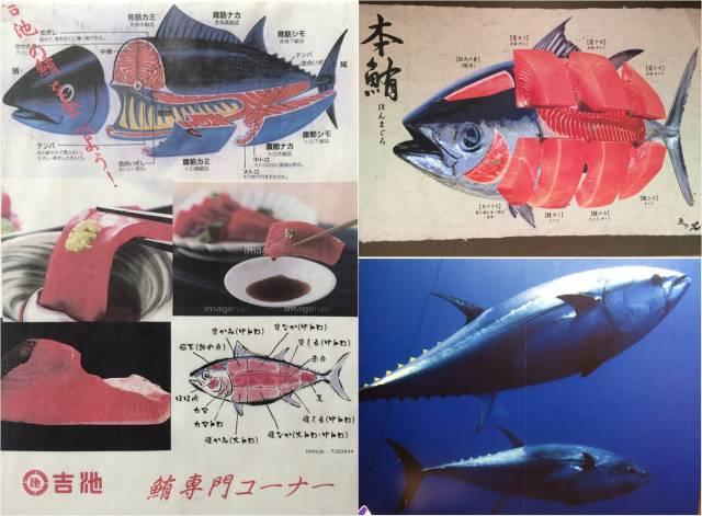 Bluefin Tuna posters, Ueno (montage)