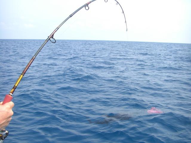 (28) Jochen fighting sailfish (10.04.16)