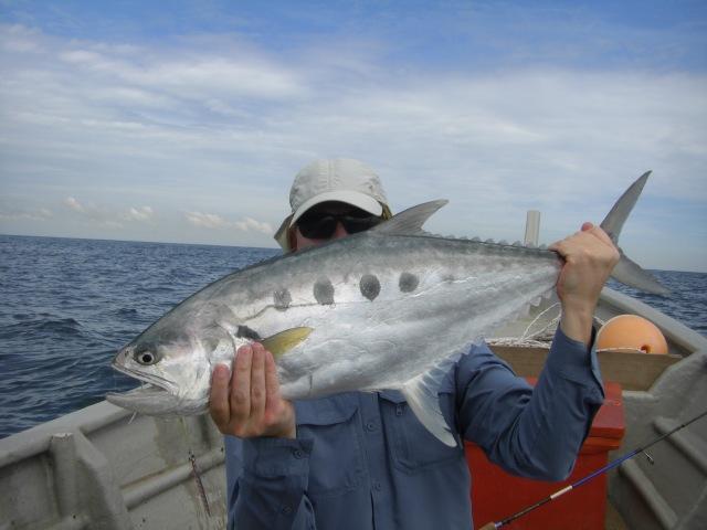 (6) 5kg Queenfish (22.05.16)