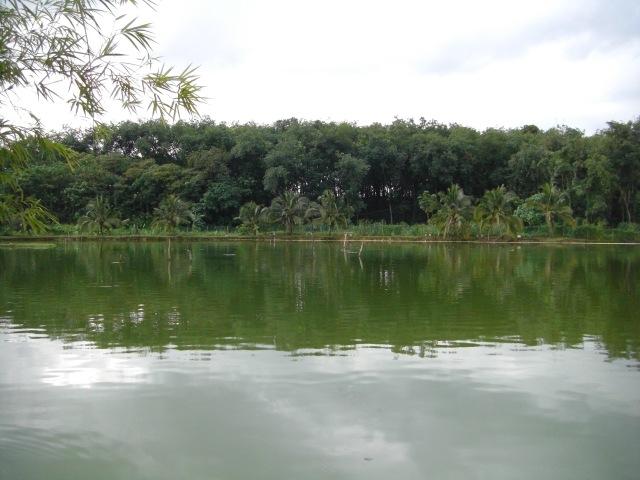 (3) FV Toman Pond views (17.06.16)