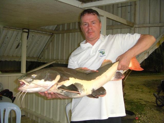 (6) Amazon Redtail Catfish c.25lbs (03.06.16)