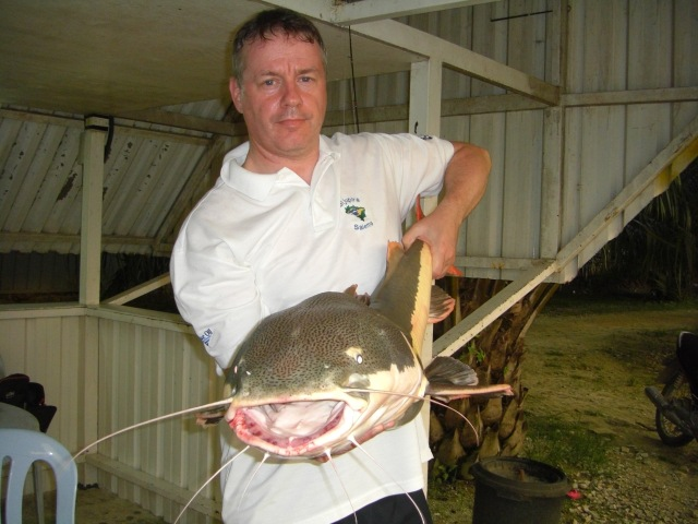 (7) Amazon Redtail Catfish c.25lbs (03.06.16)