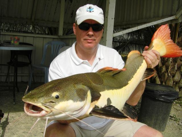 (1) Amazon Redtail_fish no.1 (12.08.16) [ed]